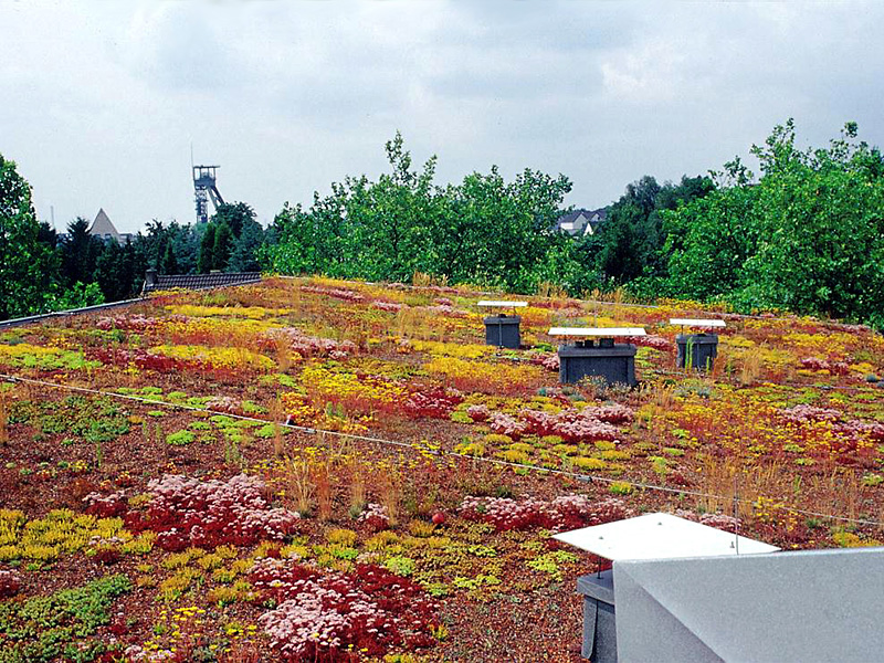 Humbert Dachbegrünung Dachgartensubstrat Zincolit